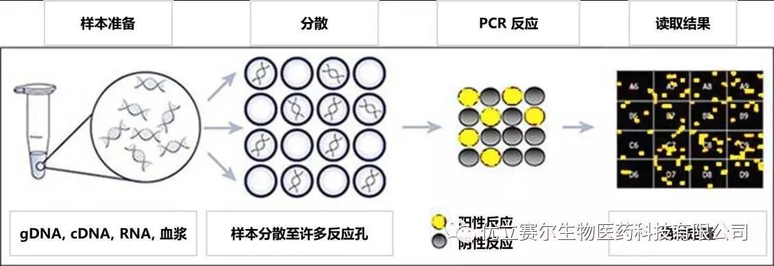 数字pcr 流程图.主要包括样本准备,分布,pcr反应和数据输出